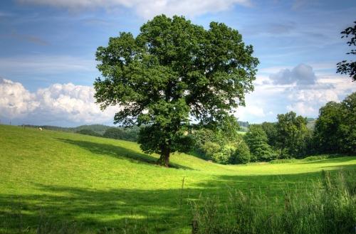 tree-402953_960_720